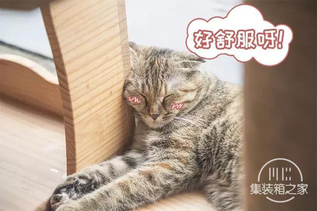 深圳超治愈的猫咪咖啡厅!萌出血-8.jpg