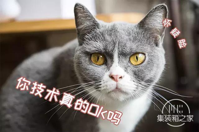 深圳超治愈的猫咪咖啡厅!萌出血-9.jpg