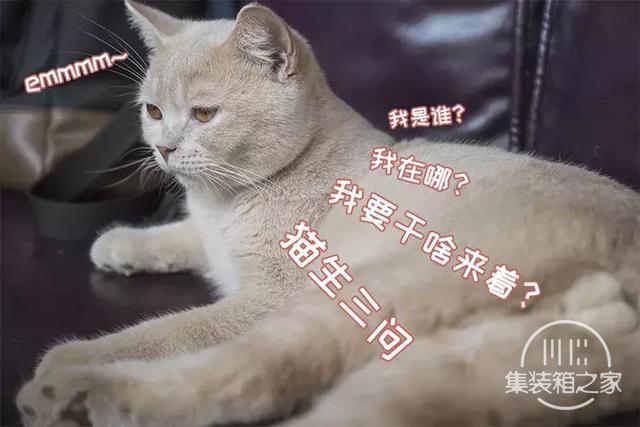 深圳超治愈的猫咪咖啡厅!萌出血-13.jpg