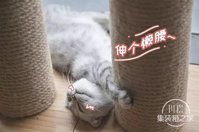 深圳超治愈的猫咪咖啡厅!萌出血-7.jpg
