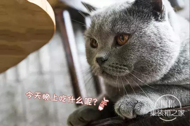 深圳超治愈的猫咪咖啡厅!萌出血-15.jpg