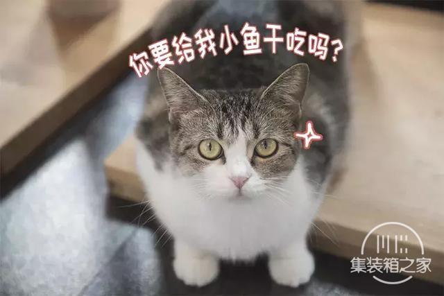 深圳超治愈的猫咪咖啡厅!萌出血-16.jpg
