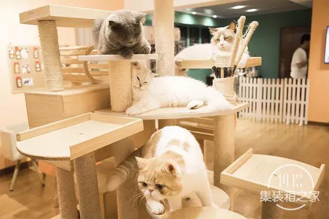 深圳超治愈的猫咪咖啡厅!萌出血-28.jpg