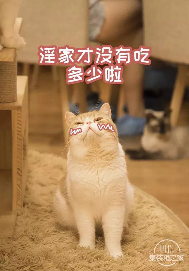 深圳超治愈的猫咪咖啡厅!萌出血-32.jpg