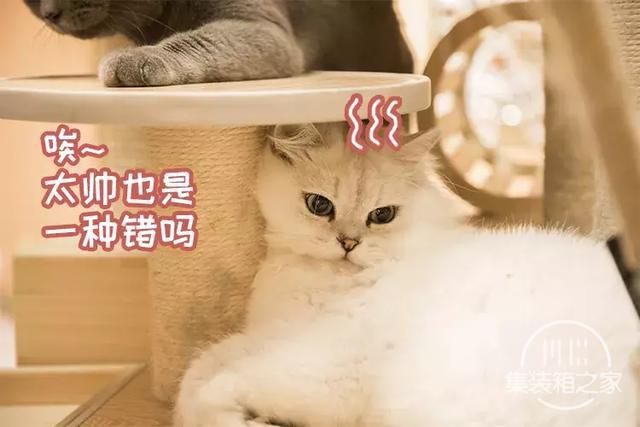 深圳超治愈的猫咪咖啡厅!萌出血-37.jpg