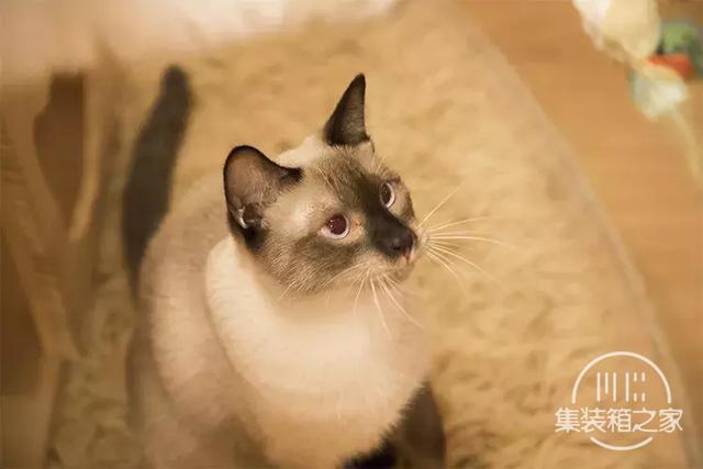 深圳超治愈的猫咪咖啡厅!萌出血-36.jpg