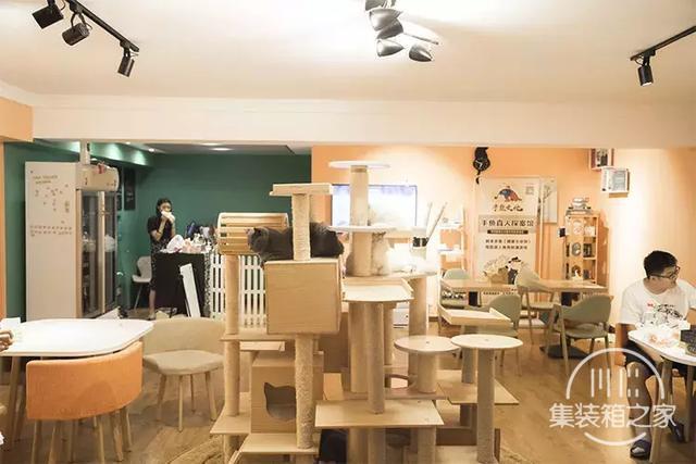 深圳超治愈的猫咪咖啡厅!萌出血-38.jpg