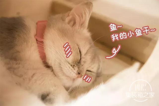 深圳超治愈的猫咪咖啡厅!萌出血-47.jpg