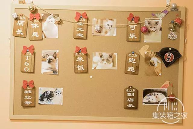 深圳超治愈的猫咪咖啡厅!萌出血-42.jpg