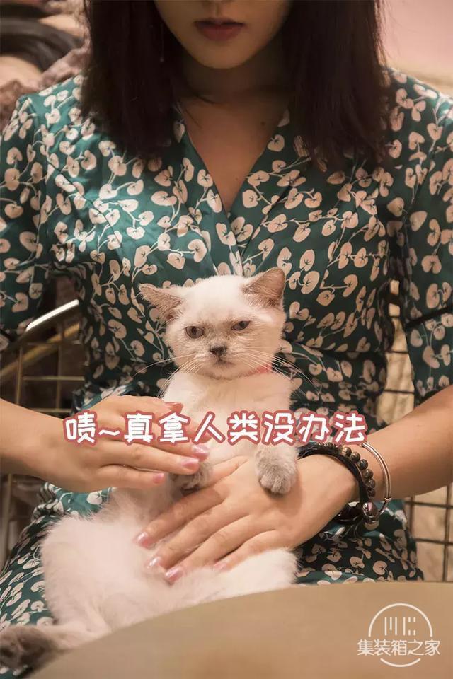 深圳超治愈的猫咪咖啡厅!萌出血-48.jpg