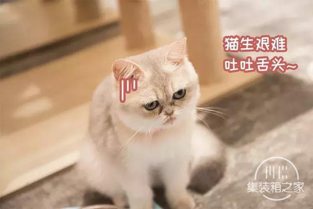 深圳超治愈的猫咪咖啡厅!萌出血-49.jpg