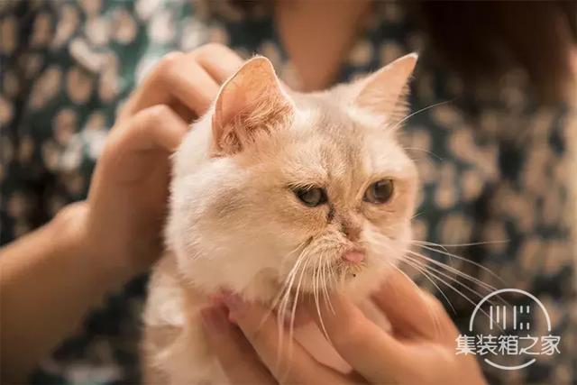 深圳超治愈的猫咪咖啡厅!萌出血-50.jpg