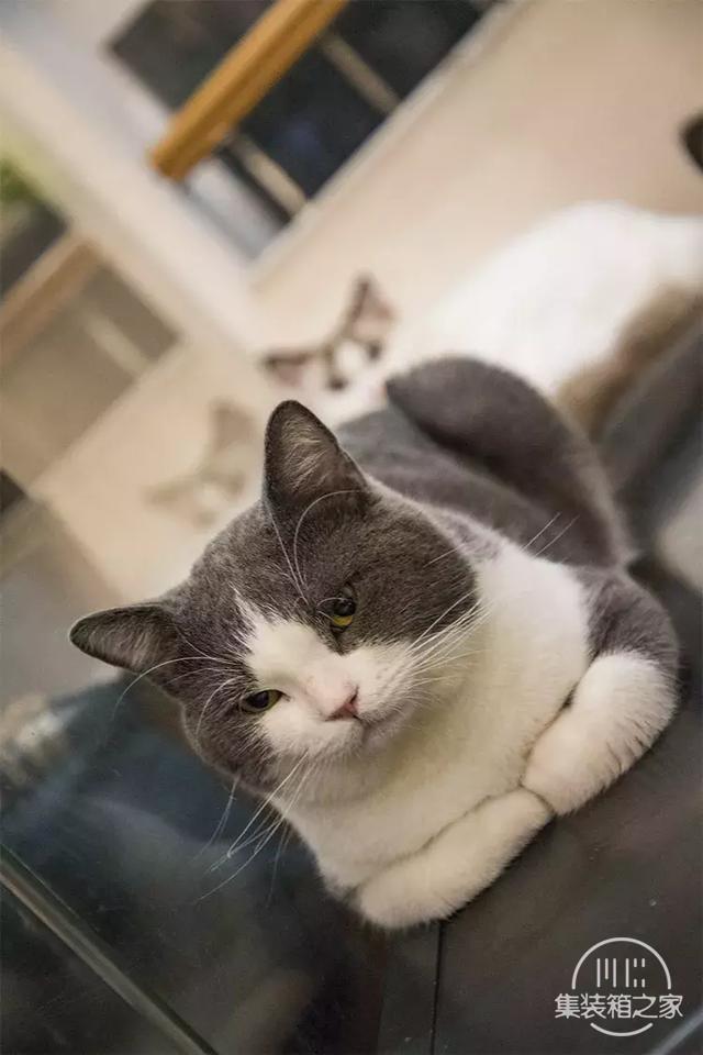 深圳超治愈的猫咪咖啡厅!萌出血-59.jpg