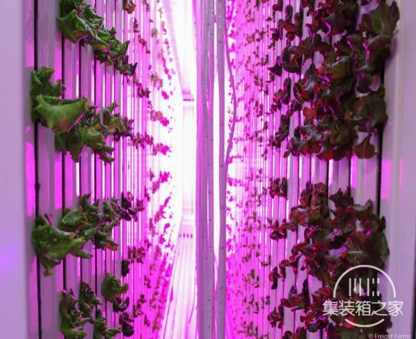 如何在没有阳光的货运集装箱内每年种植4吨食物-2.jpg