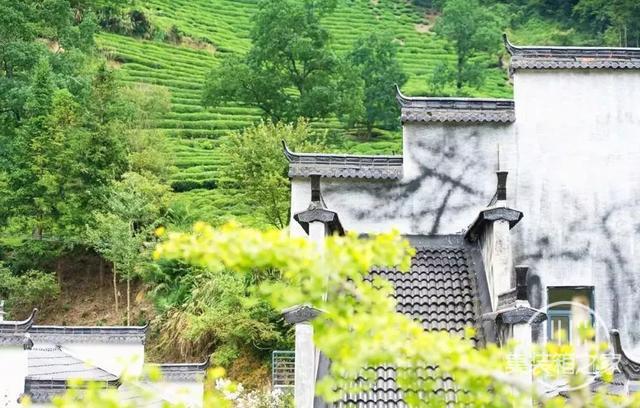 """黄山山水间藏了家""""集装箱组成""""的亲子民宿,遛娃8000㎡山水间-26.jpg"""